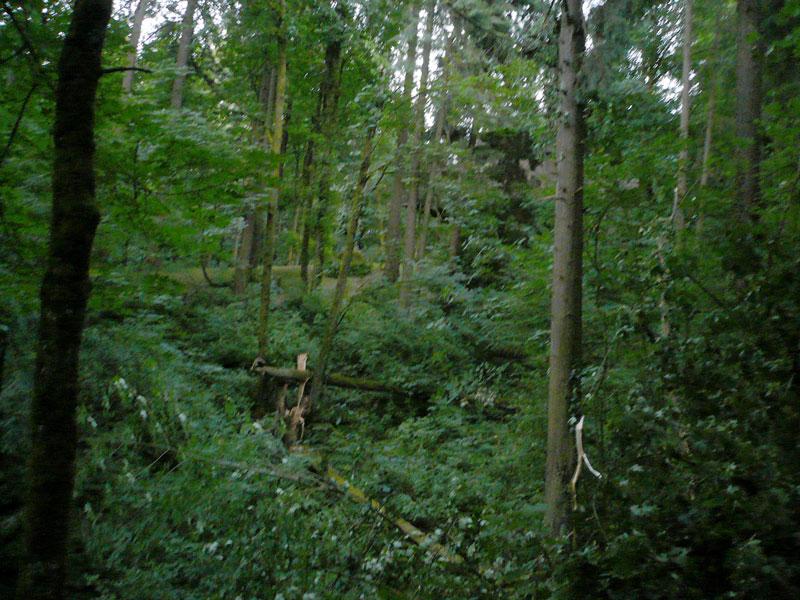 Marquam Trail, Portland OR